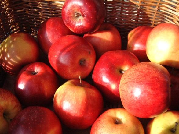 pressoir-pommes